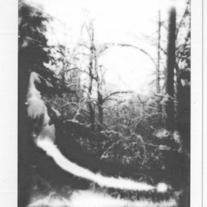 polaroid art - black and white print - forest 50X40