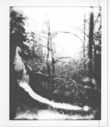polaroid art - black and white print - forest 50X40
